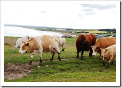 cloghercows