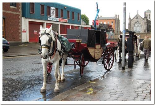 Dublin horses